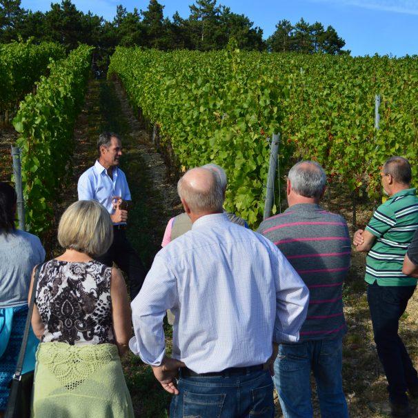gewanderte Weinprobe